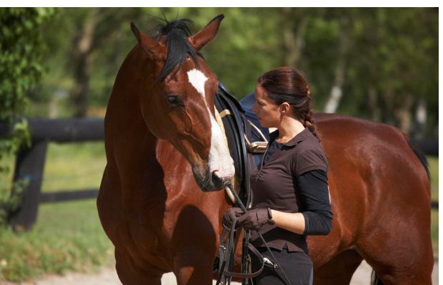 http://www.danmillerhf.com/wp-content/uploads/2011/06/05_horsemanship.jpg
